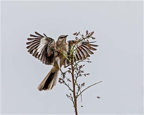 To Kill a Mockingbird by Harper Lee - UK Essays